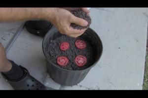 他把番茄切片後放入盆中,兩個禮拜後「超萌」的事件就發生了!
