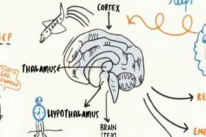 睡覺只是浪費時間?神經科學家告訴你:為什麼我們需要睡眠