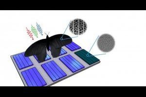 生活技.net: 受蝴蝶翅膀啟發科學家開發吸光能力 2倍的太陽能板