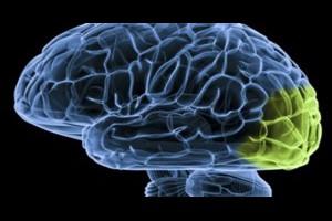 生活技.net: 研究大腦必須得先虛擬一個大腦