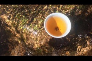 【解暑又健康只需一杯茶】... - 孫紅茶行 Sun Home Tea | Facebook