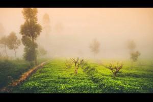 【掌握這三個要點,泡好一杯茶根本就沒那麼難】1、茶的用量 ... - 孫紅茶行 Sun Home Tea | Facebook