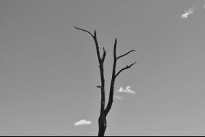 【一棵受傷的樹 - 深度好文】... - 孫紅茶行 Sun Home Tea | Facebook