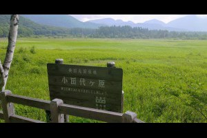 Jeff & Jill 的足跡: 奧日光‧小田代原自然探險路