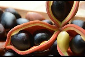 台灣好農部落格 | 像栗子、地瓜、菱角?你吃過蘋婆嗎? - 台灣好農部落格
