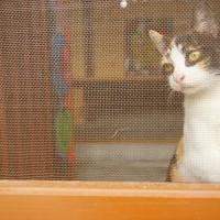 【轉角遇見貓】鹿港桂花巷藝術村 @ 兩輪車和四腳獸 :: 痞客邦 pixnet ::