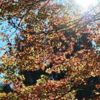 【和平】福壽山農場‧松盧(2012.11.10) - yam輕旅行
