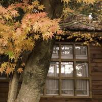 屬於紅色的季節 ─福壽山農場24HR楓紅之旅 - yam輕旅行