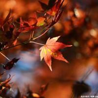 DCView 秋天在福壽山.楓紅、農場風情