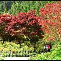 【南投景點】杉林溪森林生態渡假園區‧四季都有好風景