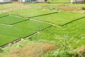 農村最美的風景:有年輕人,沒有華麗農舍   吳曉樂專欄   udn專欄   udn時事話題