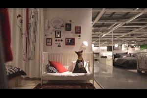 #IKEA動巧思幫助流浪狗找到家:帶出有別於傢俱所帶不出來的溫馨感