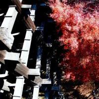 楓世界遺產日本清水寺 閑靜暖人的秋楓逸趣-主題-欣旅遊