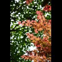 [台北]陽明山台北奧萬大。春日楓紅,渲染山林 @ 奇緣童話。旅行誌 ChiYuan :: 痞客邦 PIXNET ::