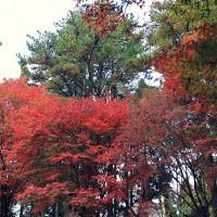 【台中.和平】福壽山農場,楓葉紅了~ 是大自然不小心打翻了顏料嗎!? @ mimi韓 行攝の足跡 :: 痞客邦 PIXNET ::